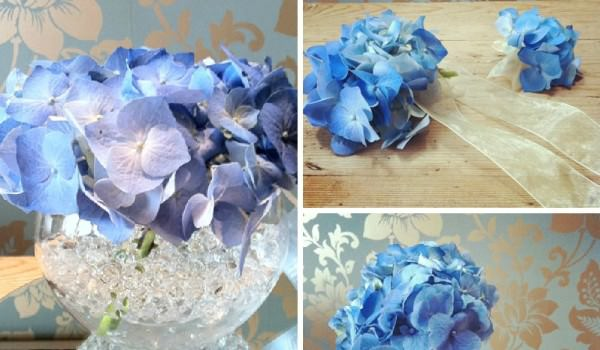summer seasonal flowers - Hydrangea