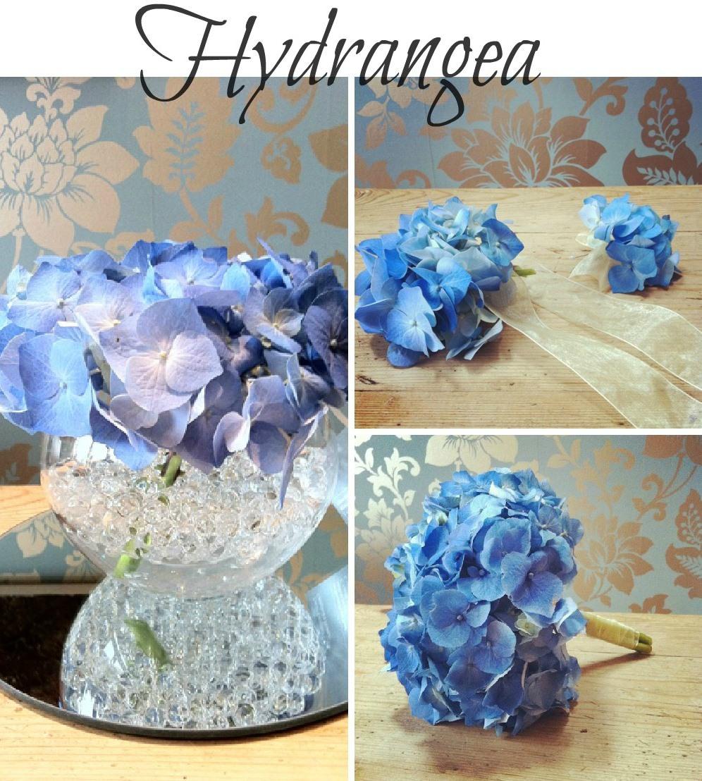 summer seasonal flowers - Hydrangea