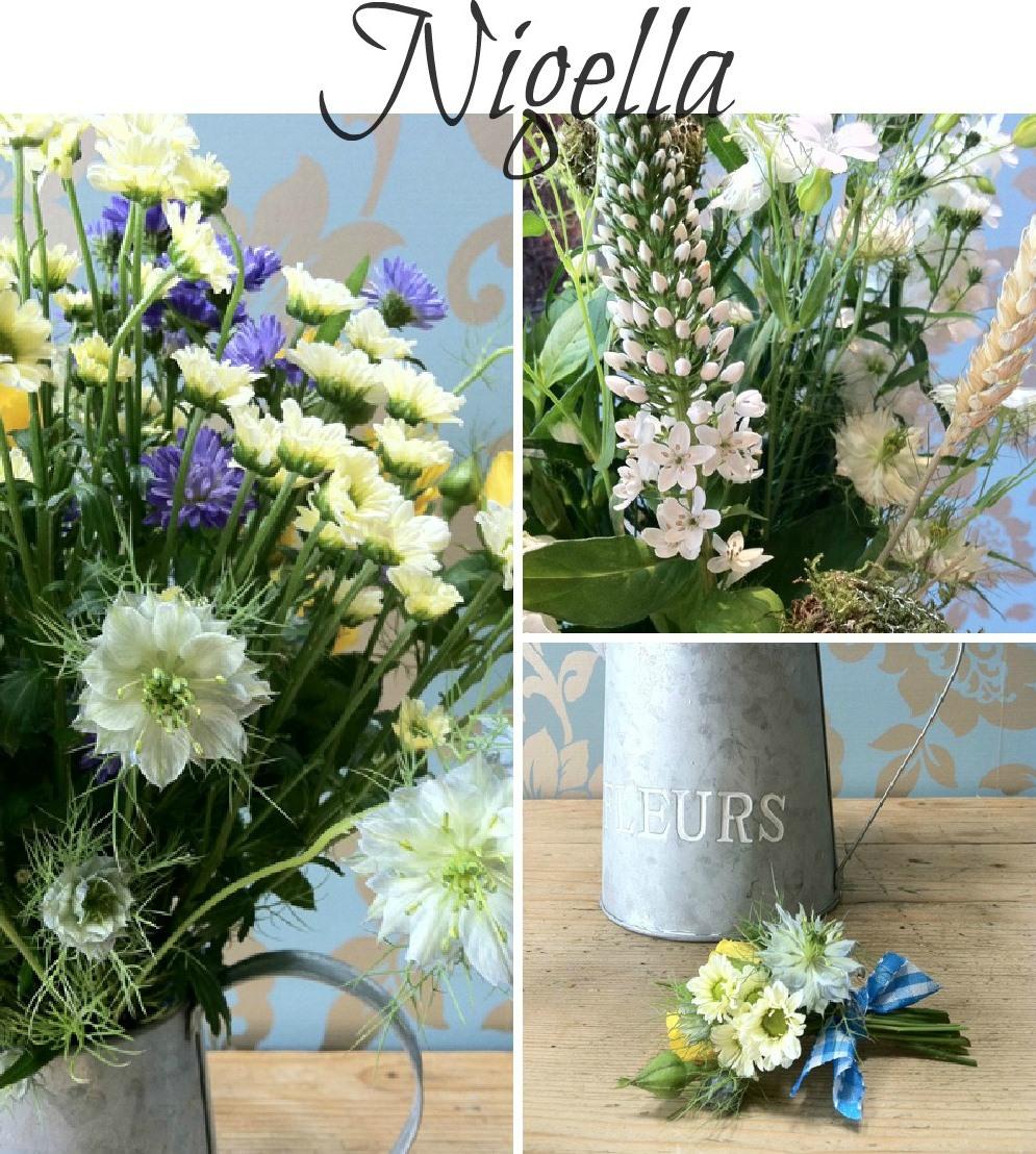 summer seasonal flowers - Nigella
