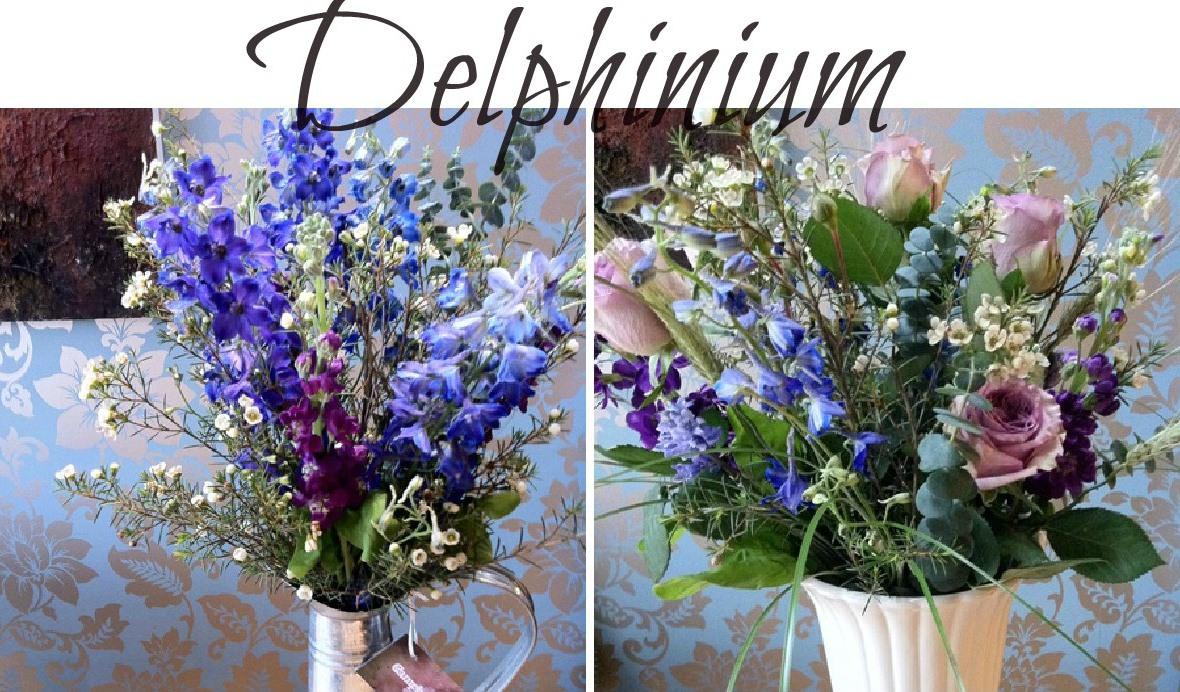 summer seasonal flowers - delphiniums