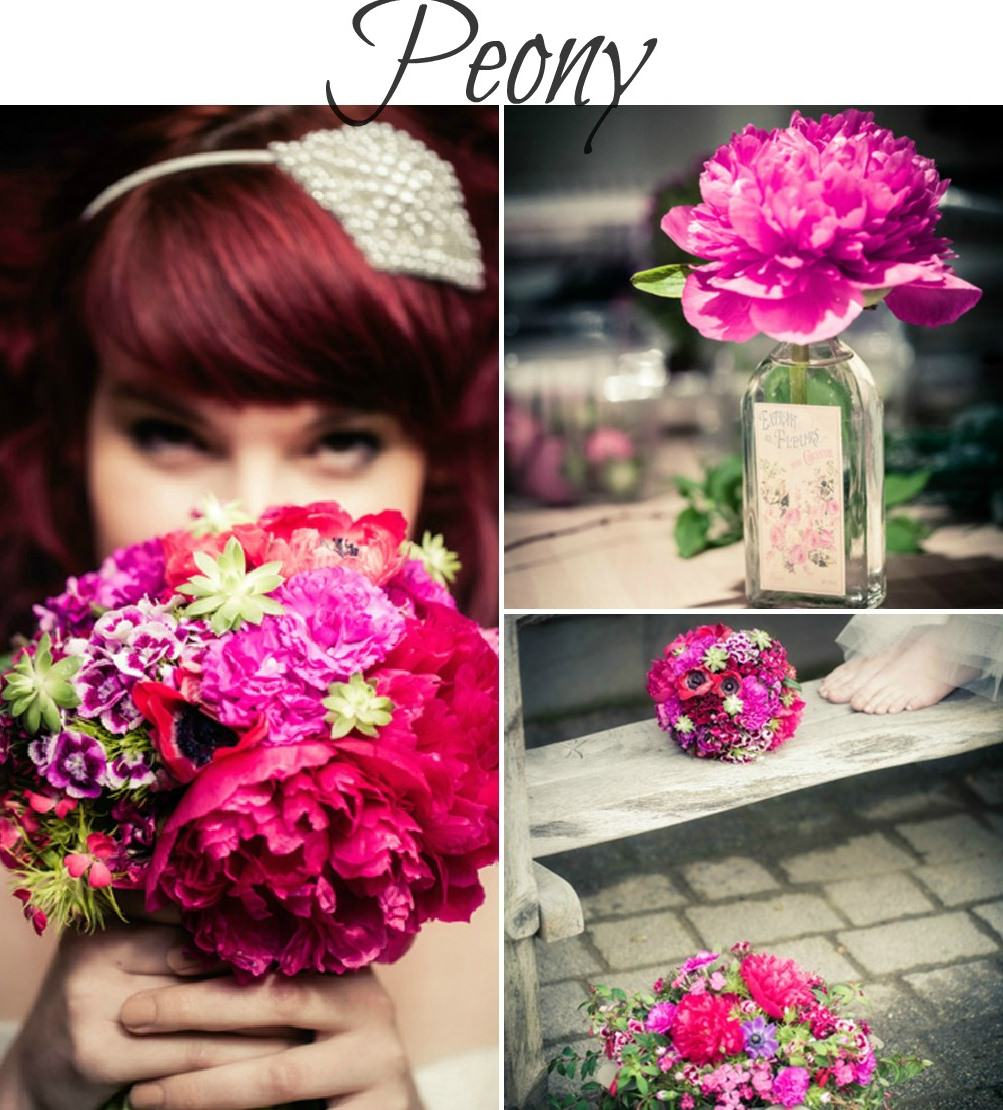 summer seasonal flowers - peony