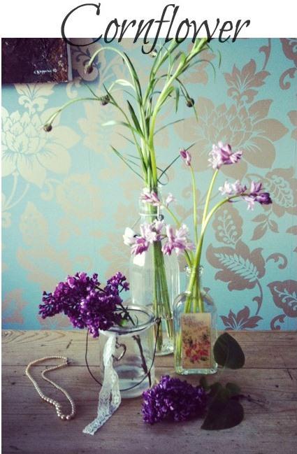 summer seasonal flowers - cornflowers