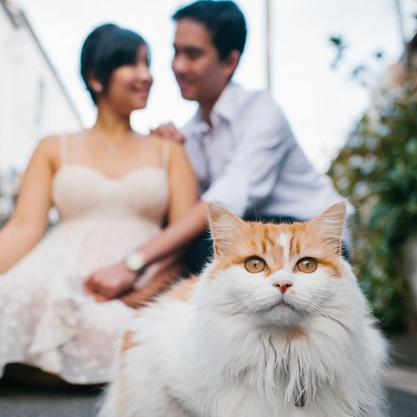 Sydney engagement shoot with lots of cats