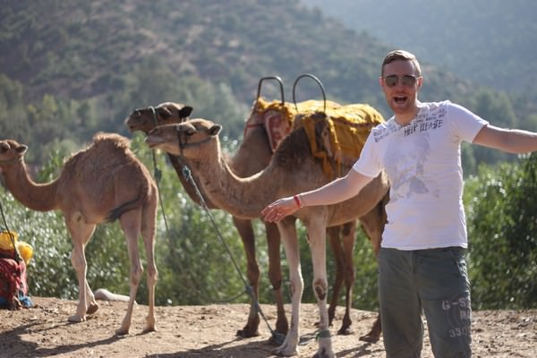Camels in the Atlas mountains in Marrakesh