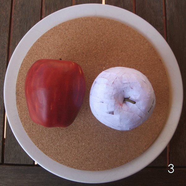 Decoupage Apple