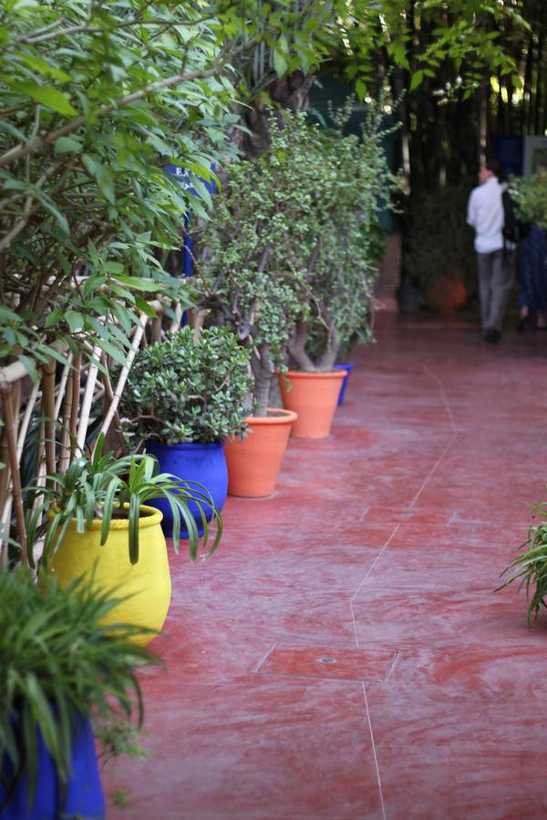 Marjorelle gardens in Marrakesh