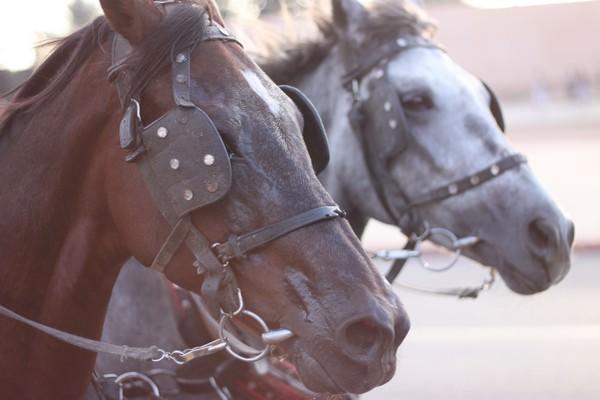 horse and cart ride around Marrakesh