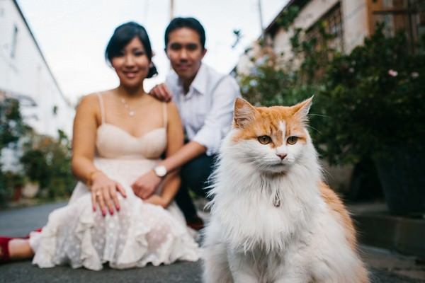 Australian engagement shoot with cats