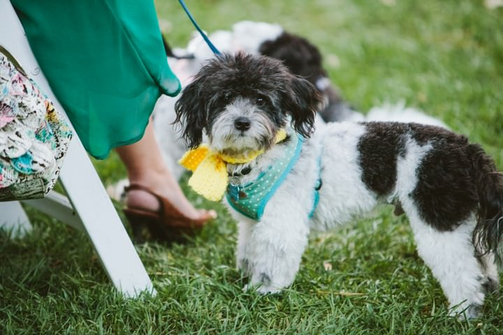 dog at a Malibu wedding