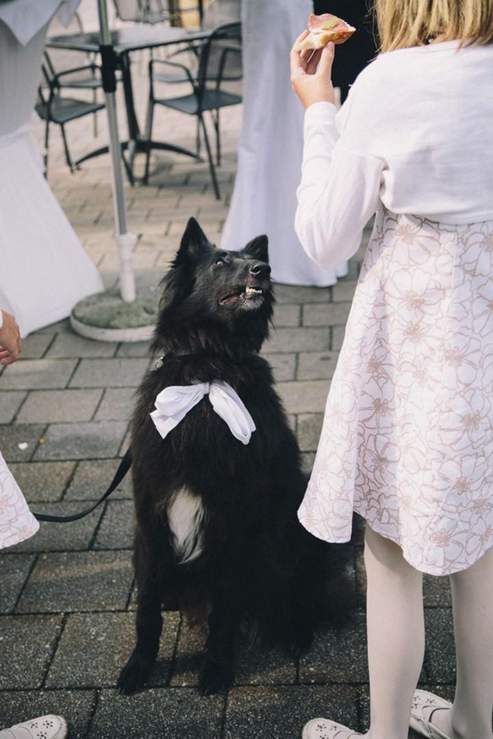 Ring-Bearing Dog