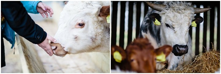 17 Animal Loving Farm Engagement Shoot. By Tux and Tales Photography