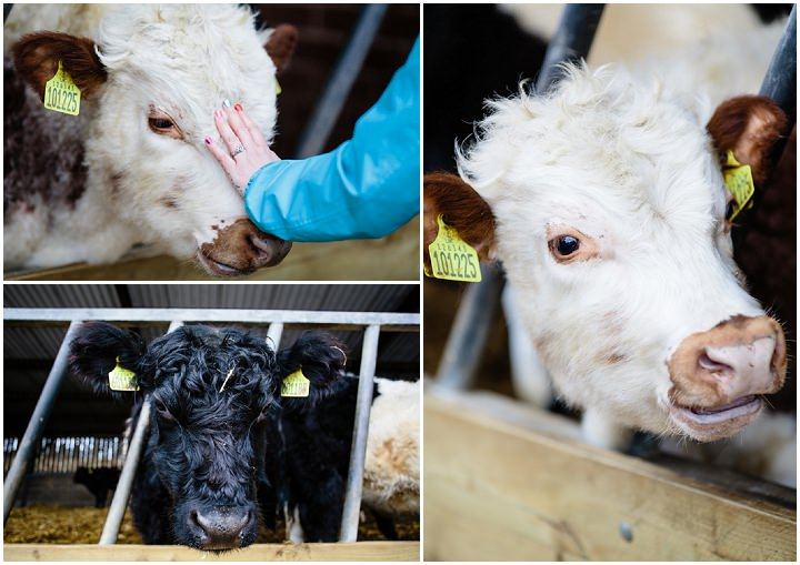 18 Animal Loving Farm Engagement Shoot. By Tux and Tales Photography
