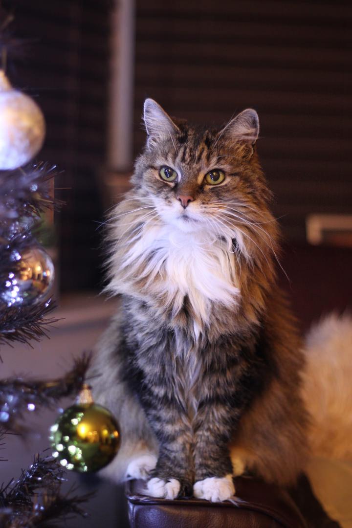Dee at Christmas