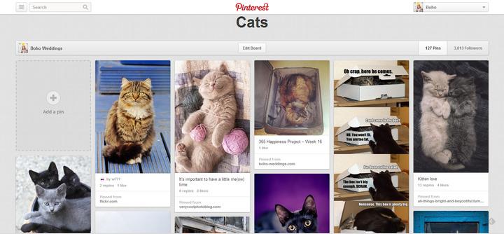 cats pinterest