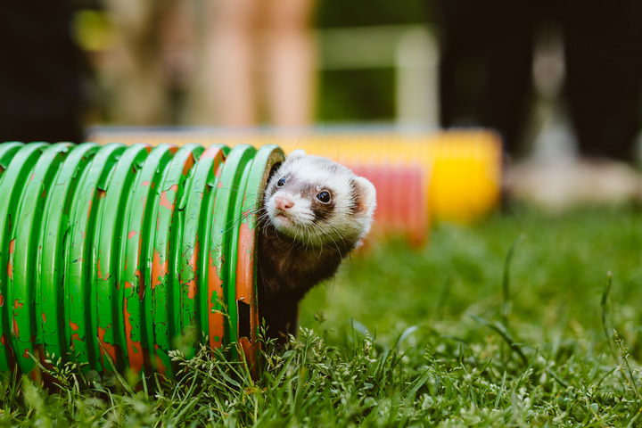 3 Handmade Wedding in The Woods Complete with Ferret Racing
