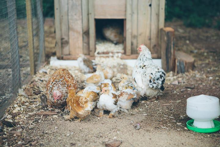 32 Rutic Farm Wedding in Somerset by Christine Wehrmeier