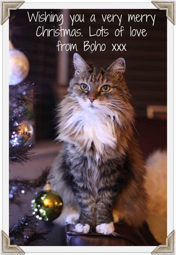 A Christmas Card Message from Boho