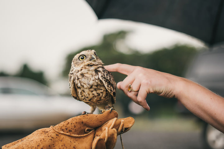 47 Animal Loving Informal Wedding By This Modern Love