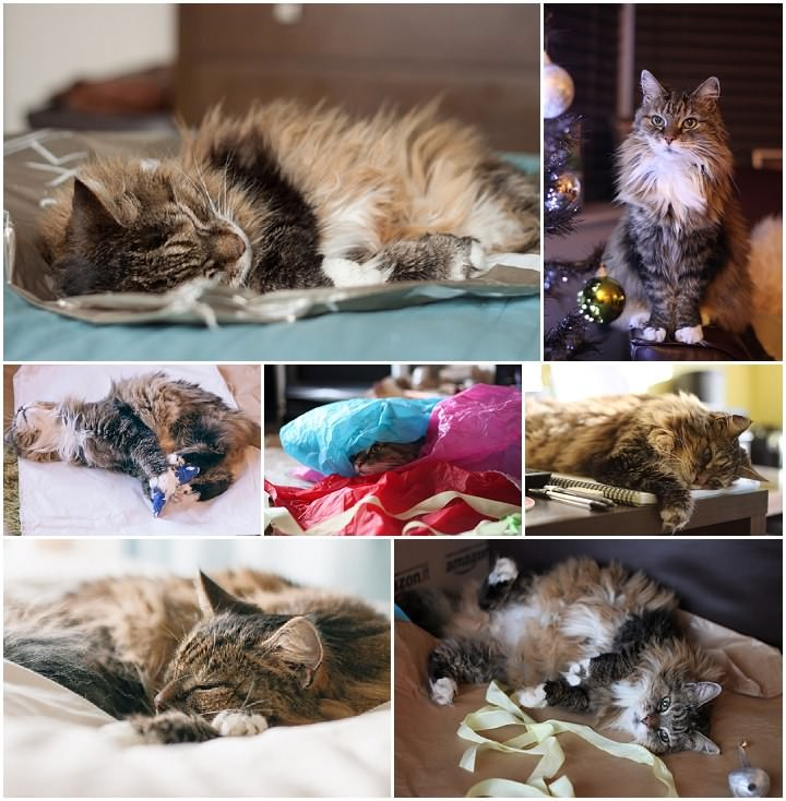 Over on A Bho Life: Saying Goodbye to a Pet – Loosing Dee