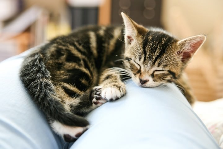 20-Pet-Photography-by-Courtney-Louise-Photography-720x480