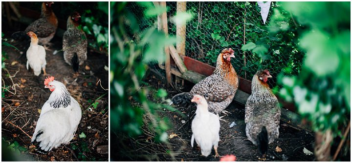 Back Garden Welsh Wedding chickens By Kelly J Photography
