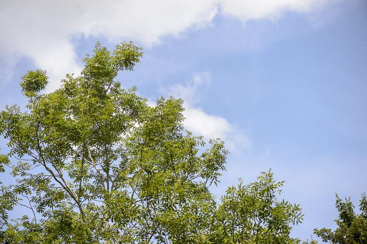 Bohemain Handfasting Wedding blue skies By Kit Fraser Photography