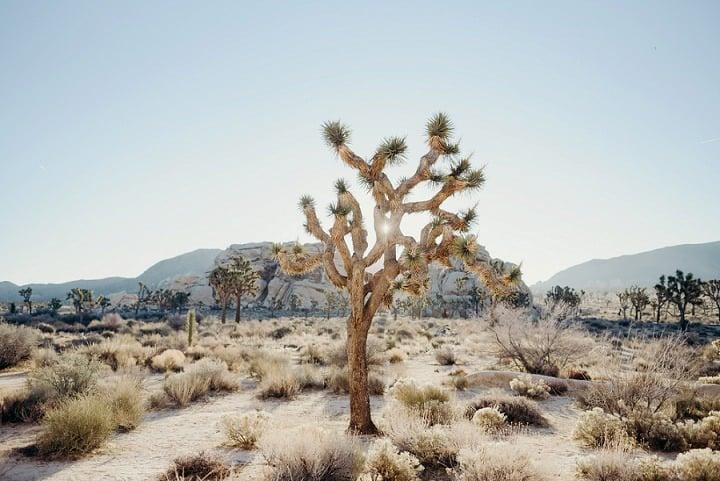 Julian and Brandon's Bohemain Desert Elopement at The Joshua Tree by Serena Genovese photography