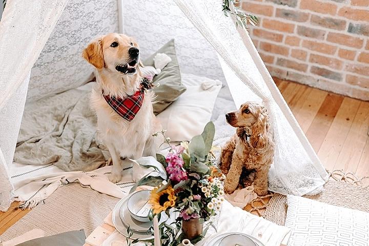 'A Paw-fect Covid Wedding' Doggy Lockdown Wedding Inspiration That is Beyond Cute!!