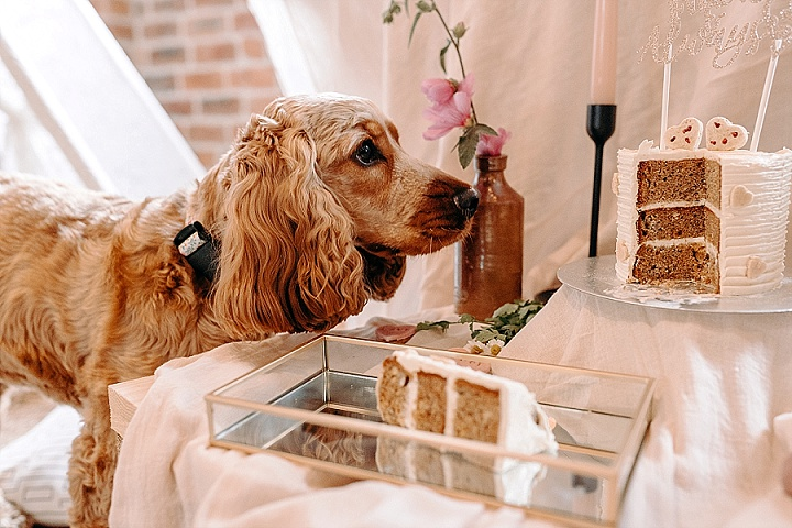 'A Paw-fect Covid Wedding' Doggy Lockdown Wedding Inspiration That is Beyond Cute!!