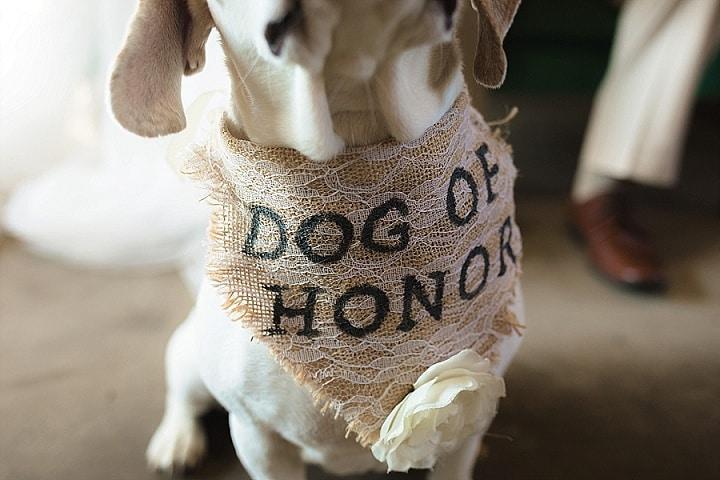 Eco Friendly Modern Garden Wedding Inspiration With The Cutest Dog